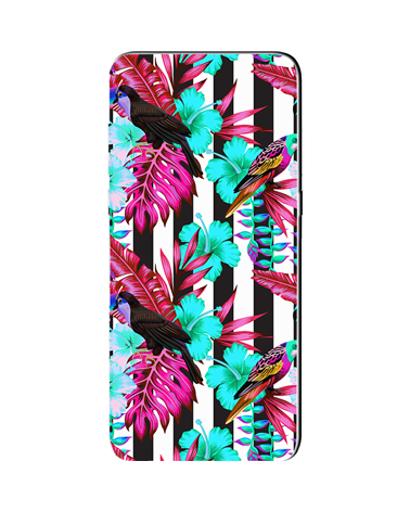 Tropical Birds - Cover Collezione -